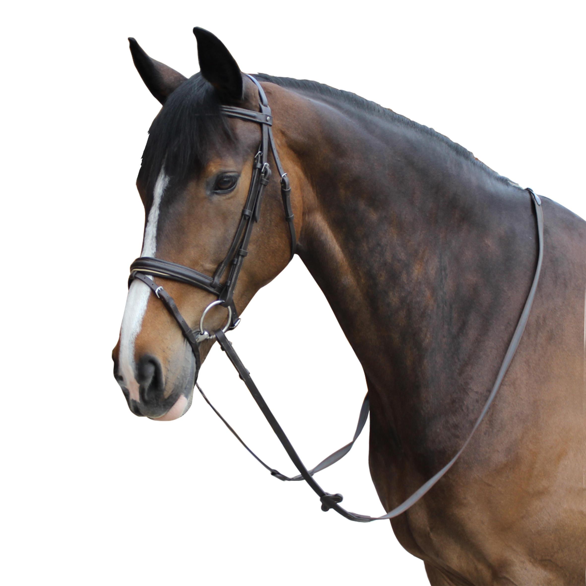 Edinburgh Horseback and Pony Riding Bridle and Reins - Brown