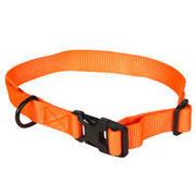 Oranžna pasja ovratnica 100