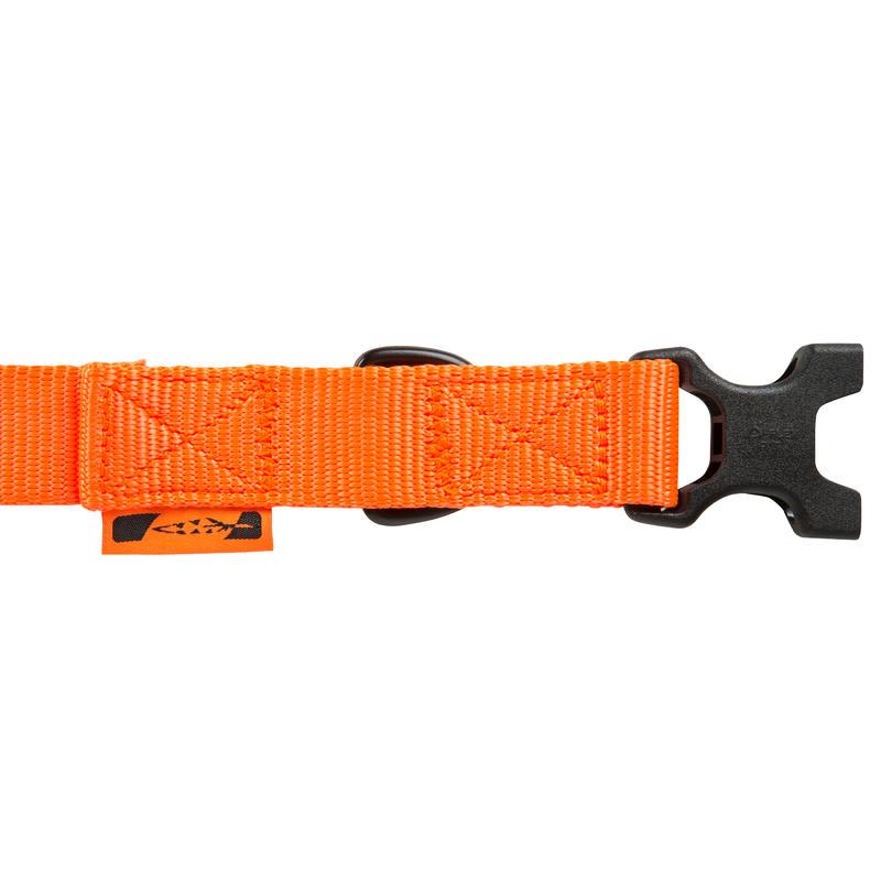 100 dog collar orange