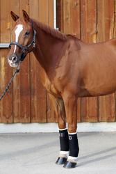 2 kleine witte onderbandages ruitersport voor pony's en paarden - 693111