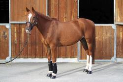 2 kleine witte onderbandages ruitersport voor pony's en paarden - 693112