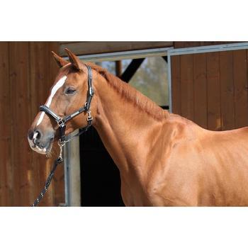 Licol équitation poney et cheval ROMEO cuir - 693116