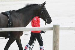 Werksingel ruitersport zwart voor pony's en paarden - 693242