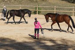 Werksingel ruitersport zwart voor pony's en paarden - 693244