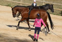 Werksingel ruitersport zwart voor pony's en paarden - 693245