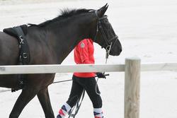 Halsterverbinding ruitersport paard Soft zwart en grijs - 693260