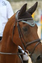 Hoofdstel + teugels Tinckle ruitersport bruin - pony en paard - 693270