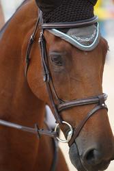 Hoofdstel + teugels Tinckle ruitersport bruin - pony en paard - 693271