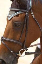 Hoofdstel + teugels Tinckle ruitersport bruin - pony en paard - 693272