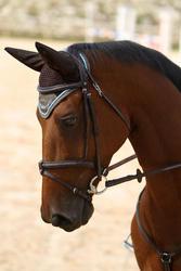 Hoofdstel + teugels Tinckle ruitersport bruin - pony en paard - 693273