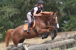 Hoofdstel + teugels Tinckle ruitersport bruin - pony en paard - 693275