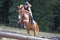 Hoofdstel + teugels Tinckle ruitersport bruin - pony en paard - 693277