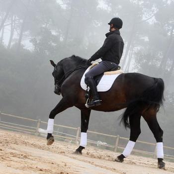 Set bride + rênes équitation cheval BEAUVALAIS noir - 801329