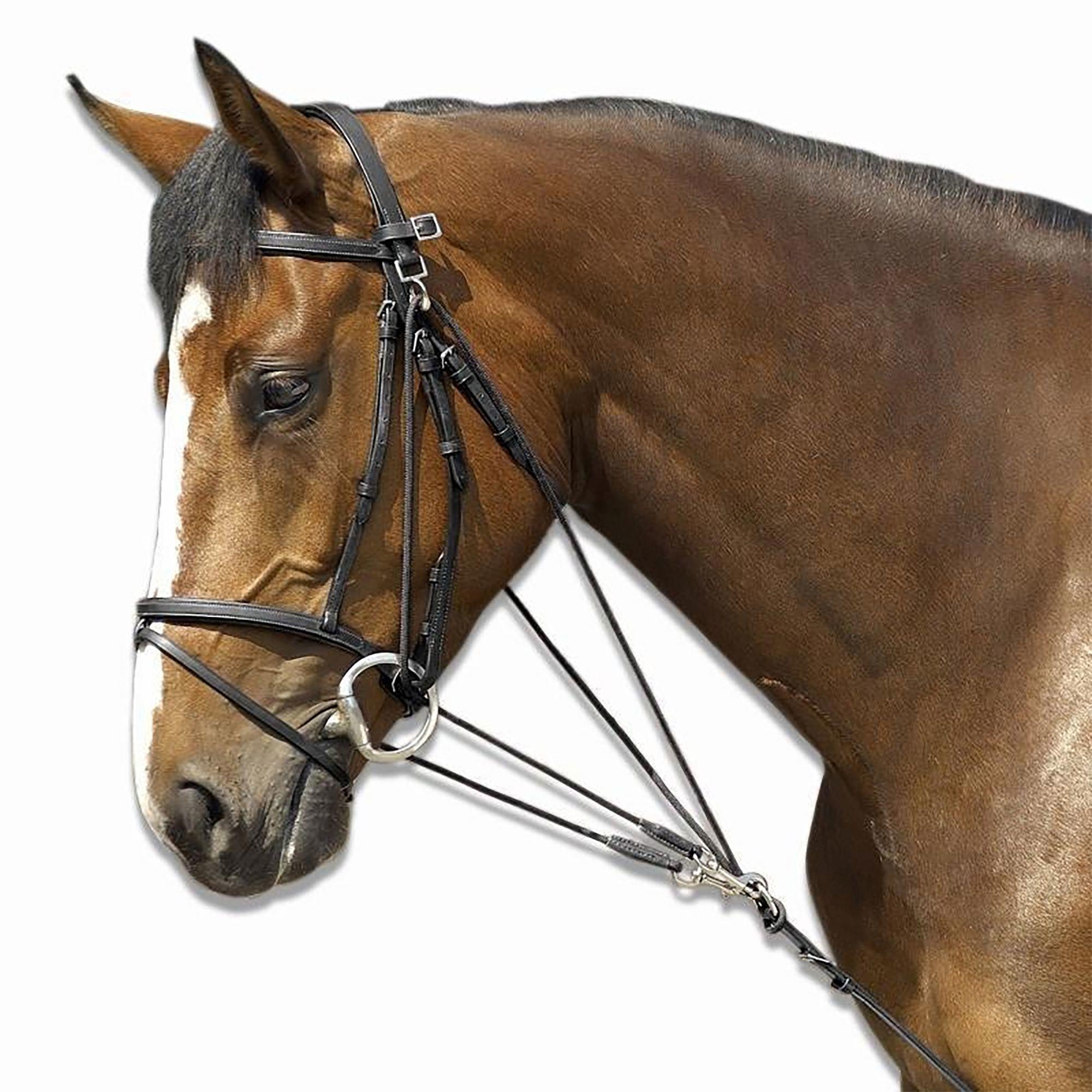 Schooling Horseback Riding de Gogue for Horse - Black