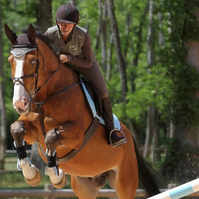Collier + martingale équitation cheval et poney ROMEO marron