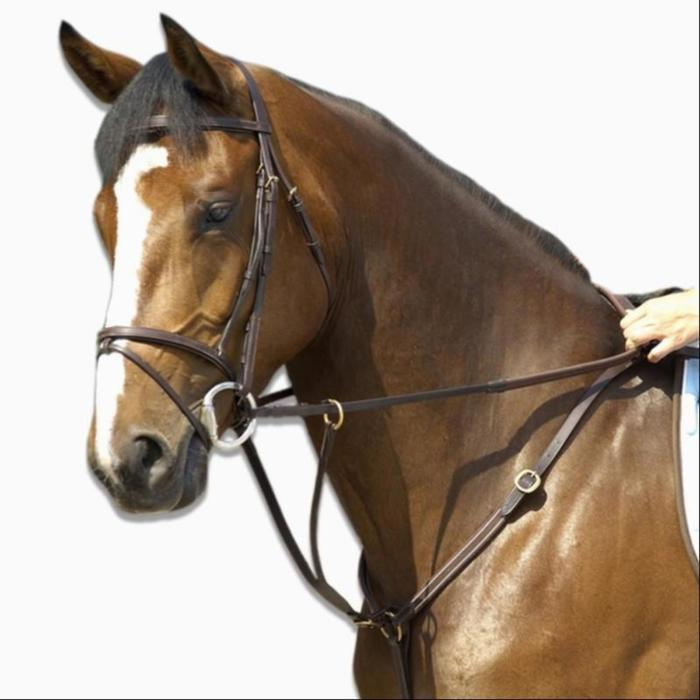 Collier + martingale équitation cheval SCHOOLING marron