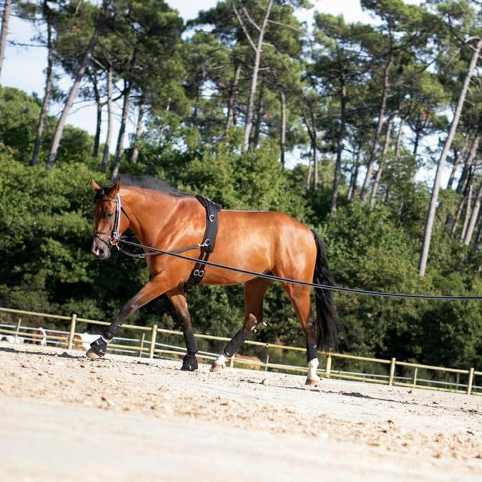 2 cloches ouvertes équitation cheval et poney OPTIMUM noir