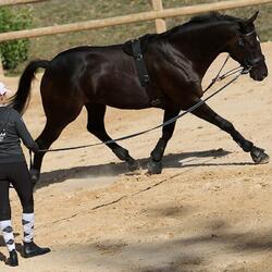 Werksingel ruitersport zwart voor pony's en paarden - 831475