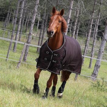 2 guêtres intégrales équitation cheval NEOPRENE noir - 831581