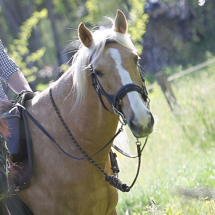 馬術騎馬牽繩Sentier-棕色