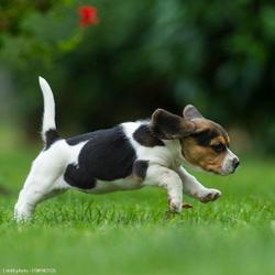 Hondenvoer Junior Growth 12 kg - 838453