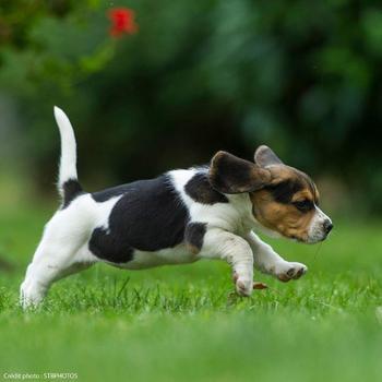 Hondenvoer Junior Growth 12 kg