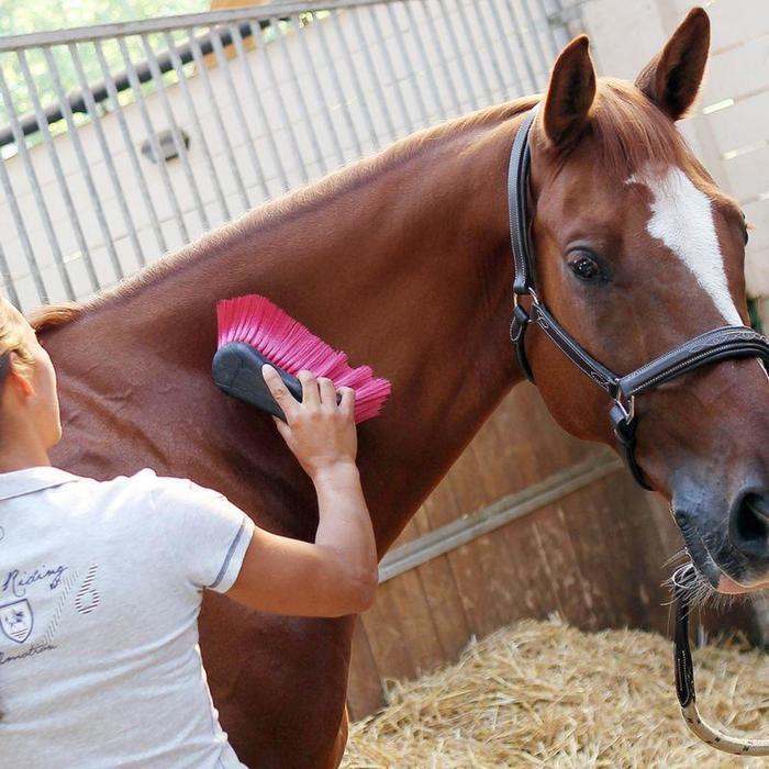 Licol équitation poney et cheval ROMEO cuir - 840119