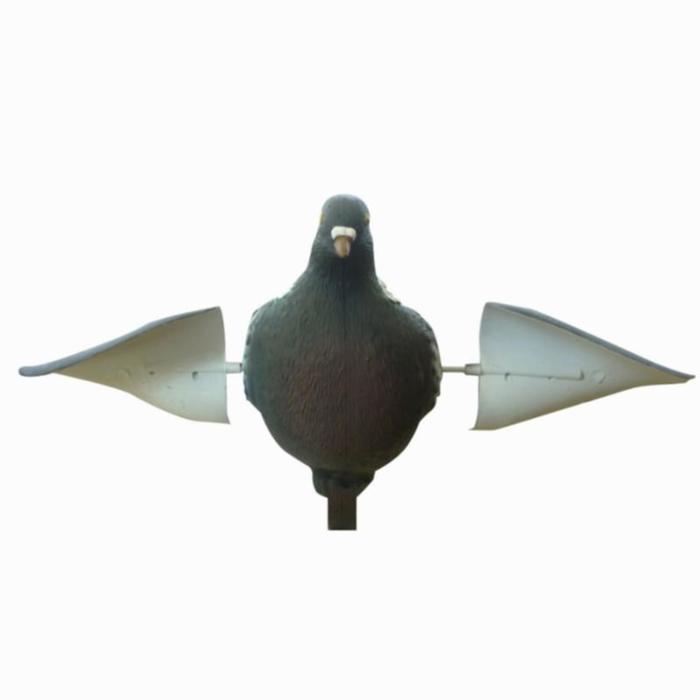 Lokduif met draaiende vleugels voor de jacht