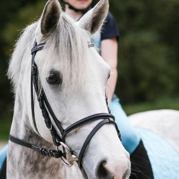 Filet + rênes équitation STRASS noir -  cheval - 848400