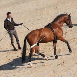 Werksingel ruitersport zwart voor pony's en paarden - 850680
