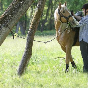Longe équitation cheval randonnée SENTIER marron