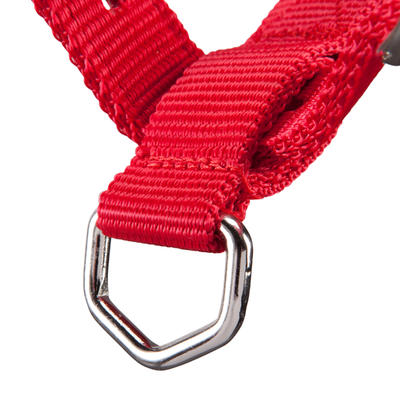 Schooling Horse Riding Halter For Horse Or Pony - Red