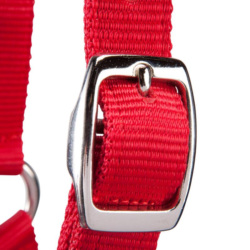 ขลุมจูงม้าสำหรับม้าโตหรือลูกม้ารุ่น Schooling (สีแดง)