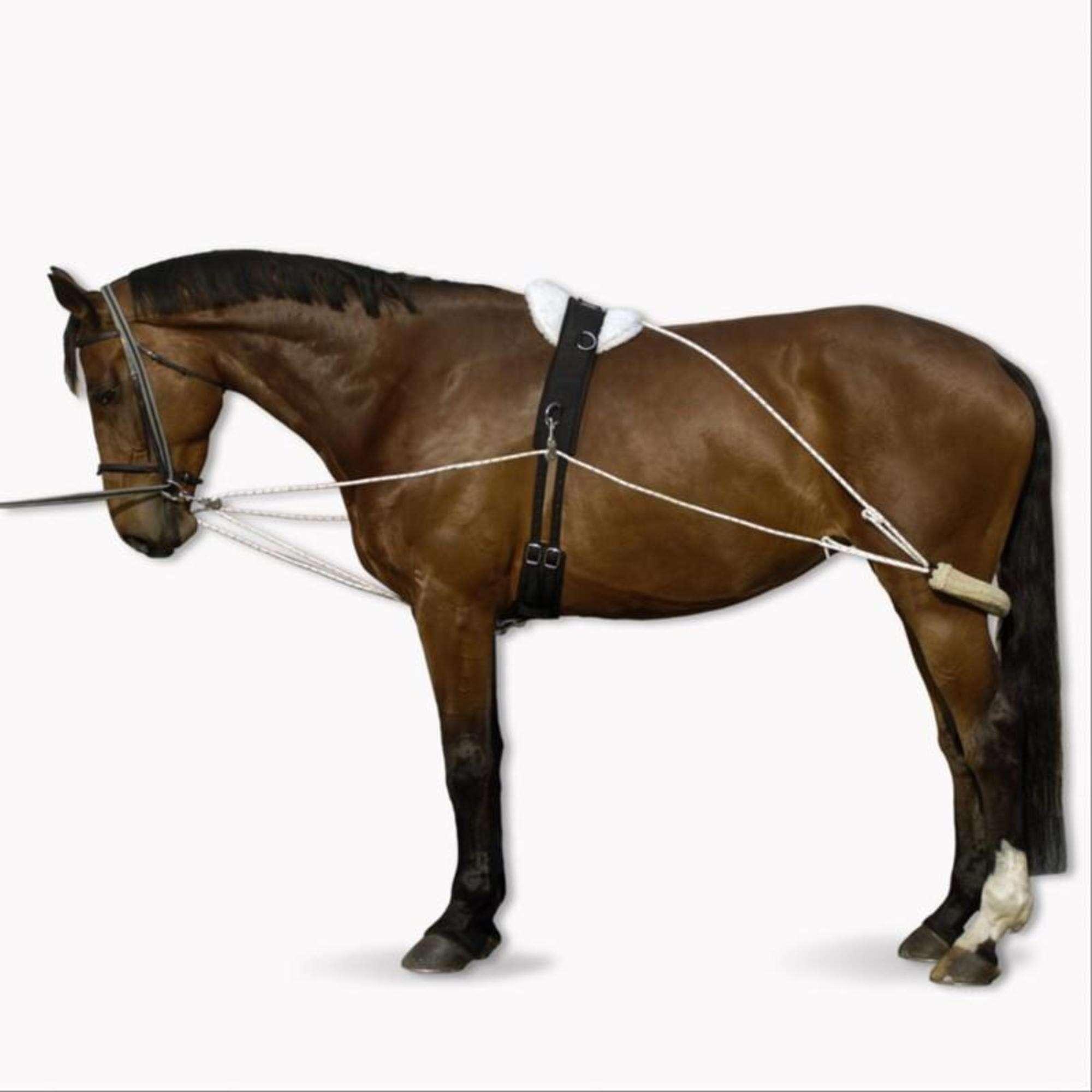 ACESSÓRIOS PARA TRABALHO COM GUIA EQUITA Equitação - Rédeas Polivalentes Equitação NO BRAND - Equipamento do cavalo em trabalho