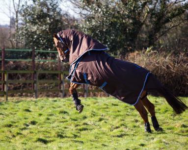 Ein springendes Pferd testet die neue Pferdedecke auf Herz und Nieren