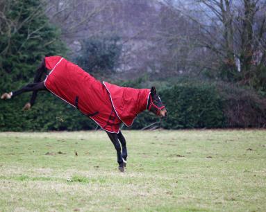 Dein Pferd darf sich austoben und Dampf ablassen