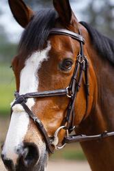 Hoofdstel + teugels Paddock ruitersport zwart- paard - 954660