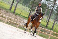 Hoofdstel + teugels Paddock ruitersport zwart- paard - 954661