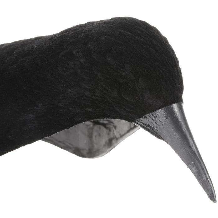 Lokvogel raaf geflockt