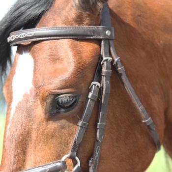 Filet + rênes équitation PADDOCK - taille cheval - 99336