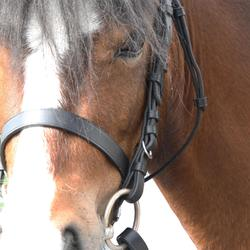 Trense und Zügel Schooling Leder Pony/Pferd schwarz