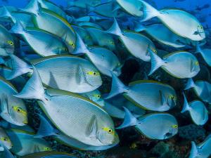 8個保護海洋的環保措施