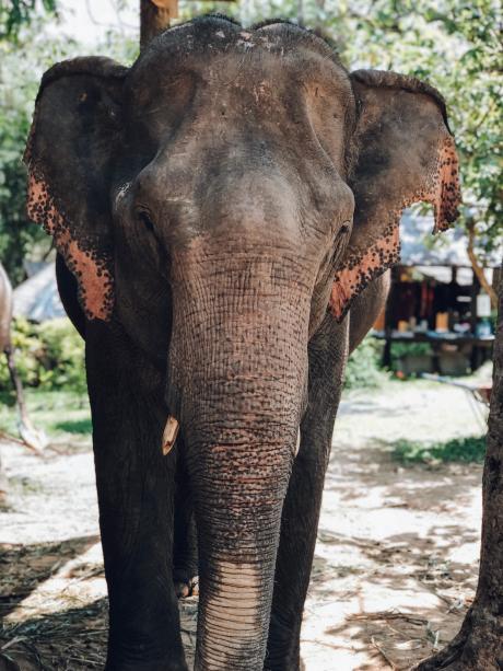 trek voyage thailande éléphant koh phangan