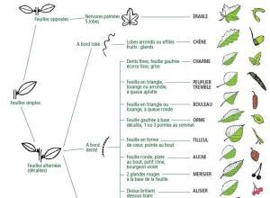 comment-reconnaitre-les-arbres-clef-de-foret-onf