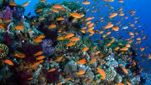 探索10個潛水和浮潛地點