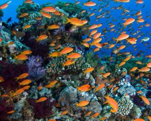 10 spots de mergulho e snorkeling para descobrir