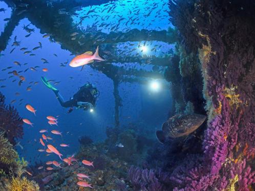 """Mergulho nos destroços """"O Grego"""" no Mediterrâneo"""