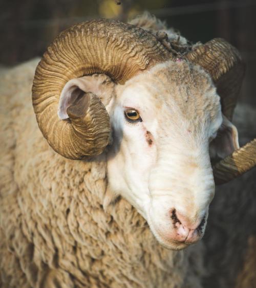 How should I wash my Merino wool trekking T-shirt?