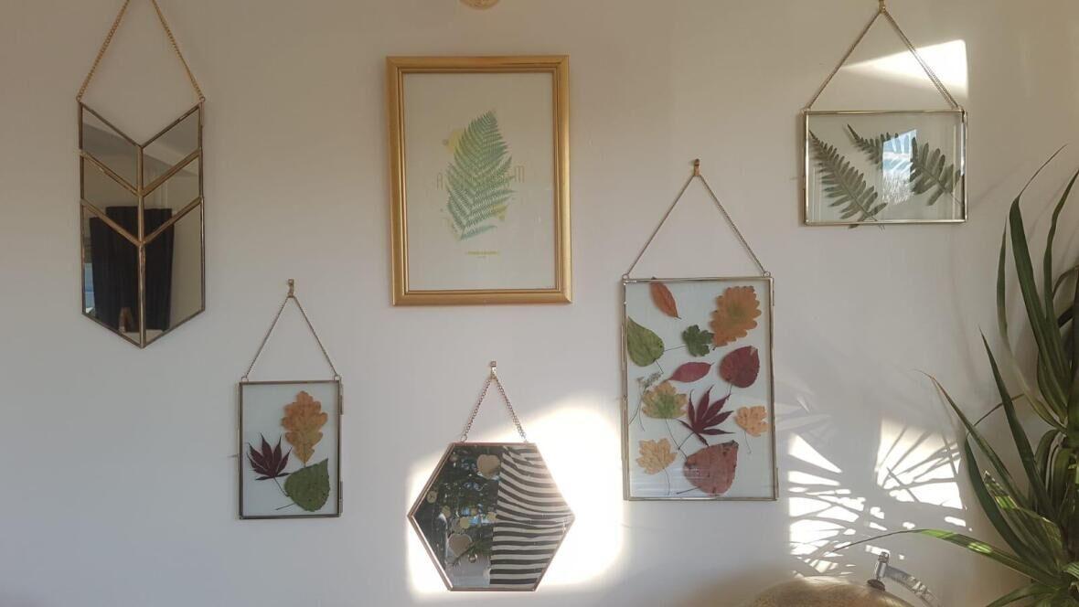 frames-herbarium-nature-leaves