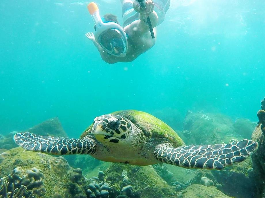 snorkeling tortue plongée sri lanka Nilaveli Pigeon Island